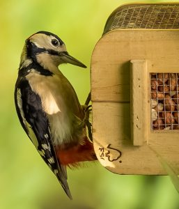 Woodpecker + Sean Callis