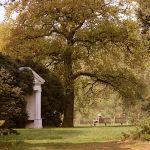 In Kew Gardens